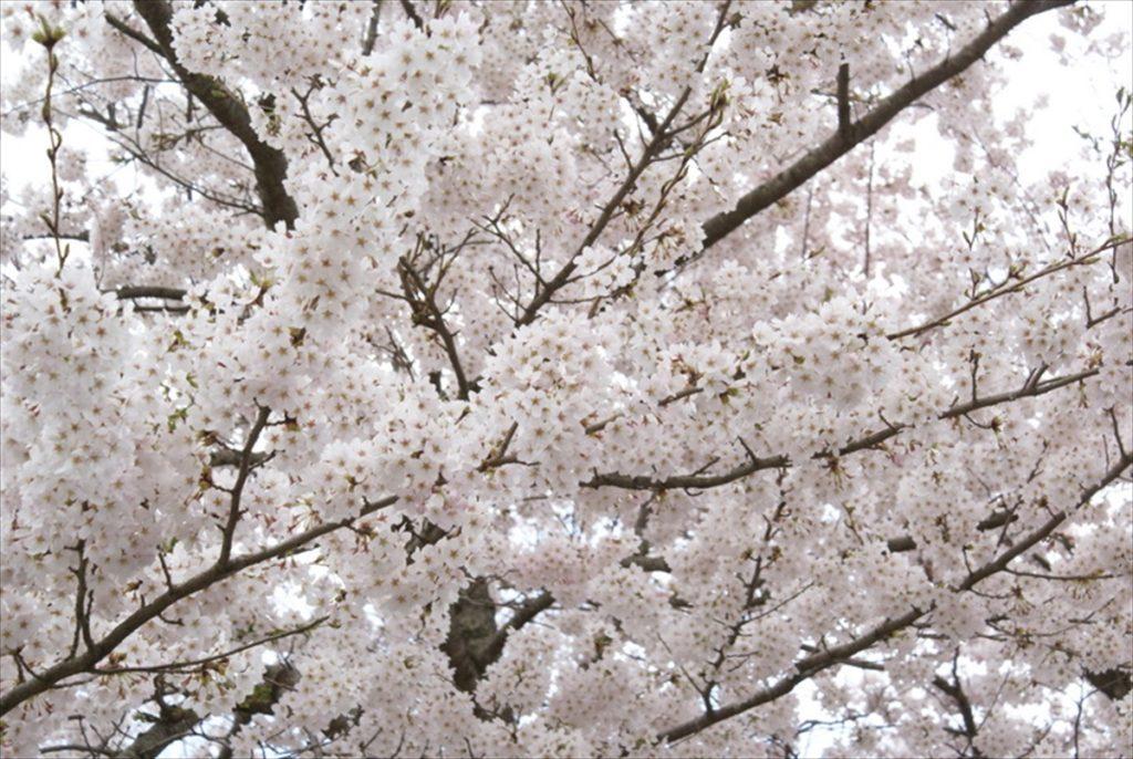 桜 筋湯温泉